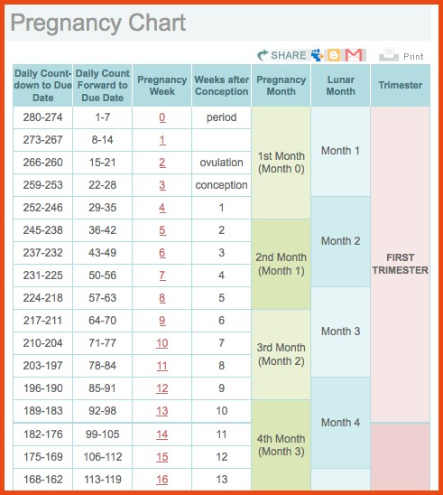 pregnancy week by week calendar